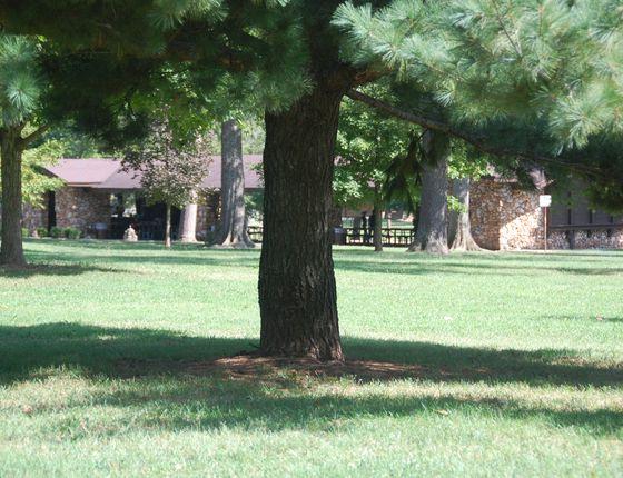 Photo 3 of Phelps Grove Park