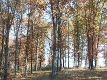 Lot 7 South Caliburn Drive Nixa, MO 65714, Nixa Homes For Sale