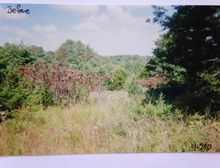 Tbd B B Highway Chestnutridge, MO 65630 - Image 1