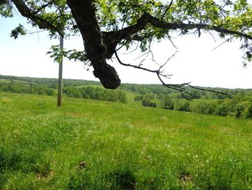 3684 Highway H Grovespring, MO 65662 - Image 1